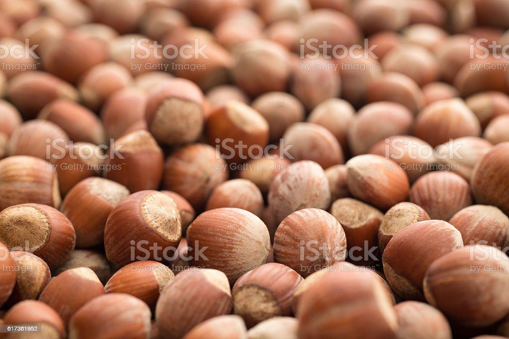 Hazelnuts with shell stock photo