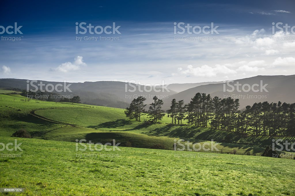 Hazy Afternoon Fields in Kaihu, New Zealand stock photo