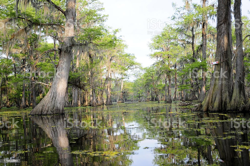 Hazy Day in the Swamp stock photo