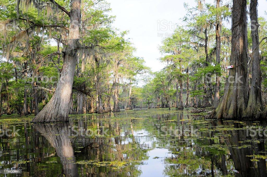 Hazy Day in the Swamp stock photo