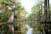 Hazy Day in the Swamp