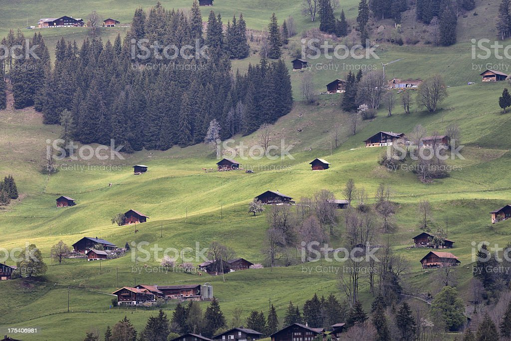 Hazy Spring Afternoon, Hillside with farms, Bernese Oberland stock photo