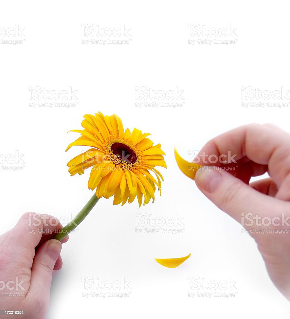 He loves me, He loves me not stock photo