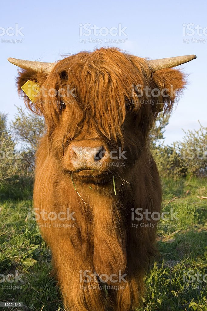 He you! Look at me. royalty-free stock photo