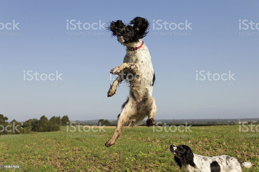 Head and shoulders above the rest stock photo