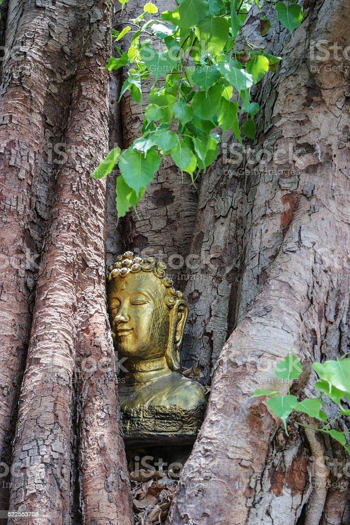 head Buddha in the  Bodhi Tree stock photo
