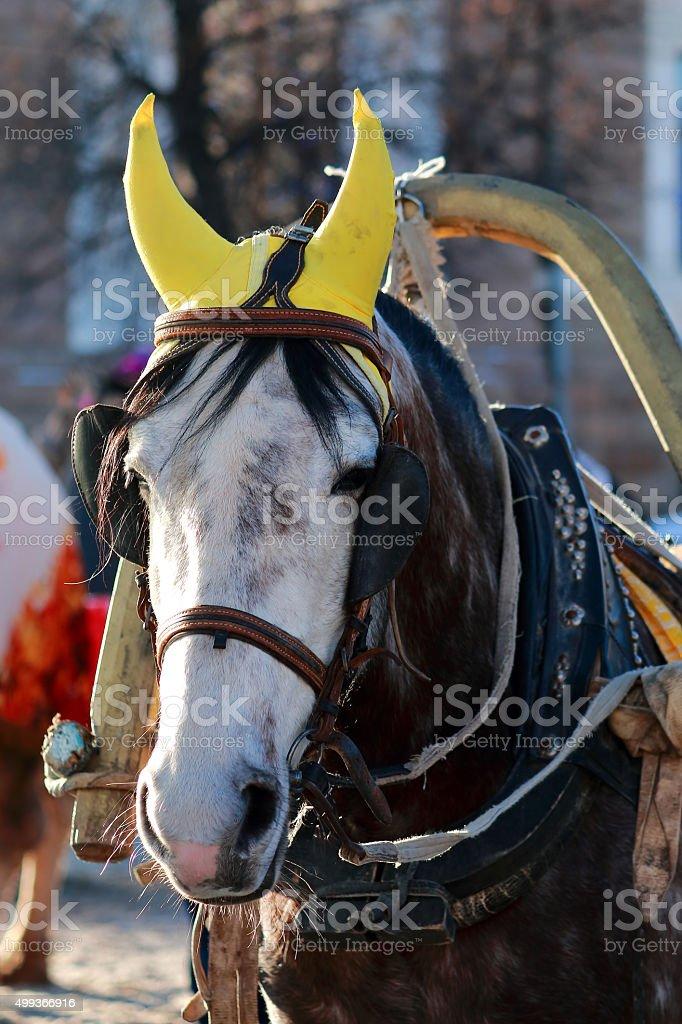 Head drawn by horses stock photo