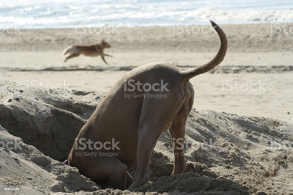 Head In The Sand stock photo
