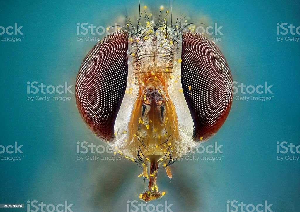 head of a gadfly stock photo
