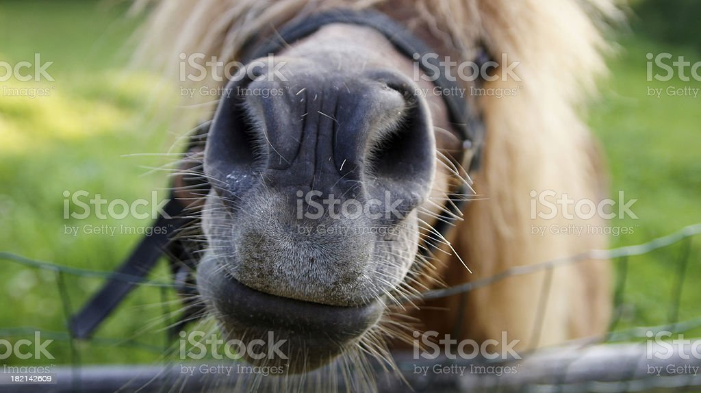 Head of a horse royalty-free stock photo