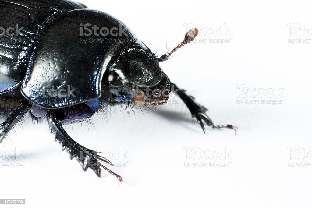 head of black bug in left upper corner stock photo