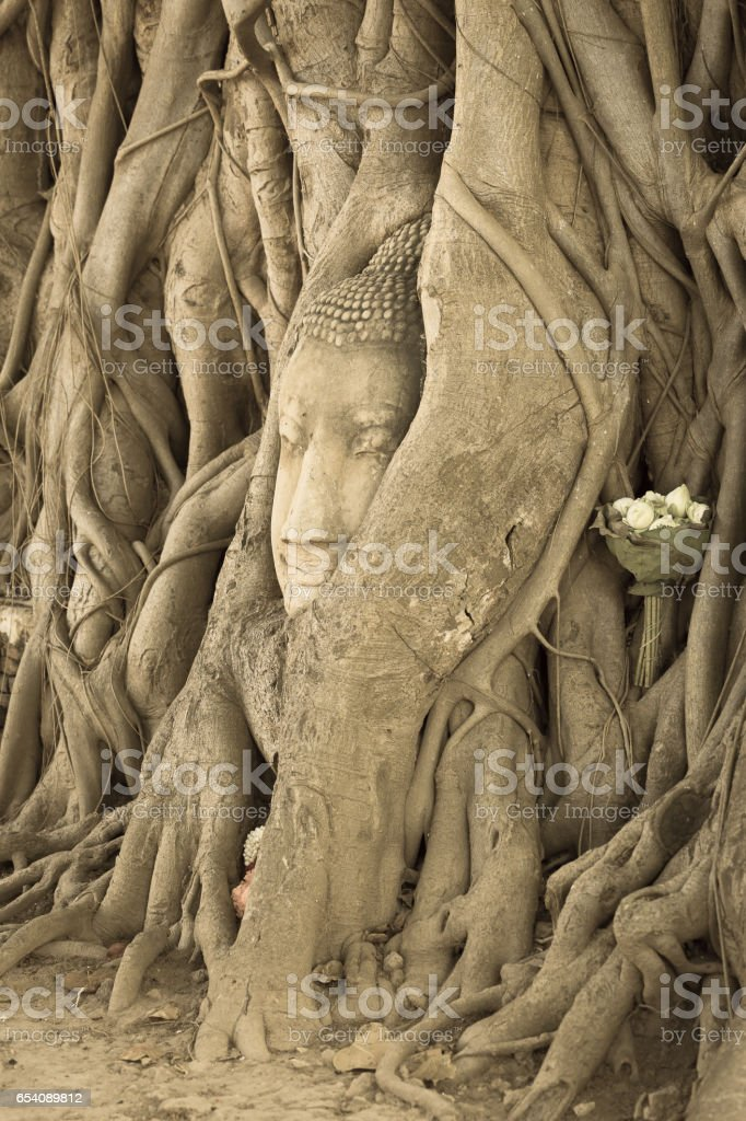 Head of Buddha statue in the tree roots at Wat Mahathat temple, Ayutthaya, Thailand stock photo