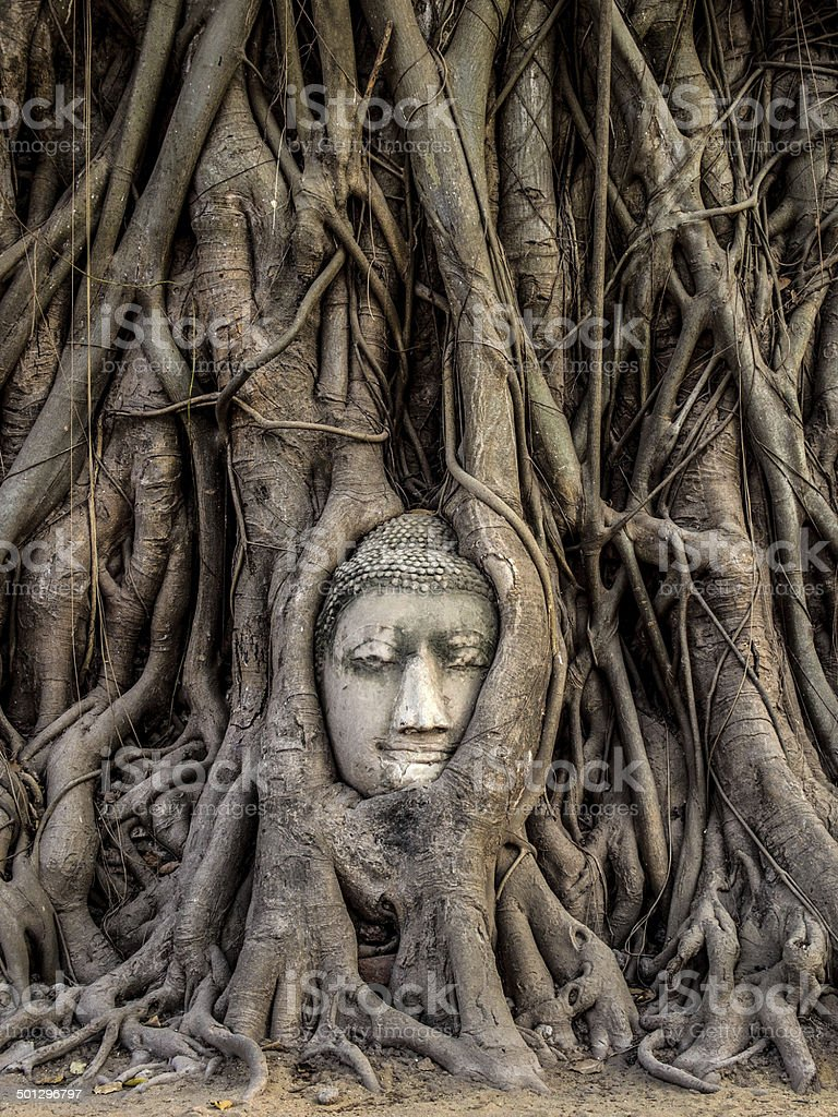Head of Buddha Statue in the Tree Roots, Ayutthaya, Thailand stock photo