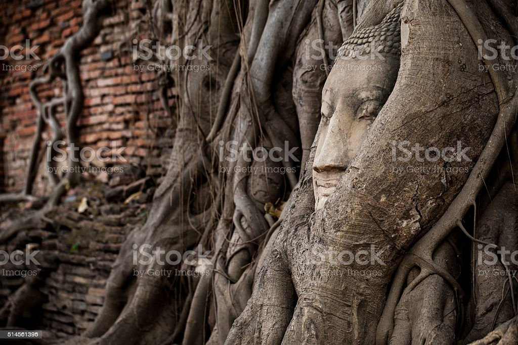Head of Buddha statue in the tree roots stock photo