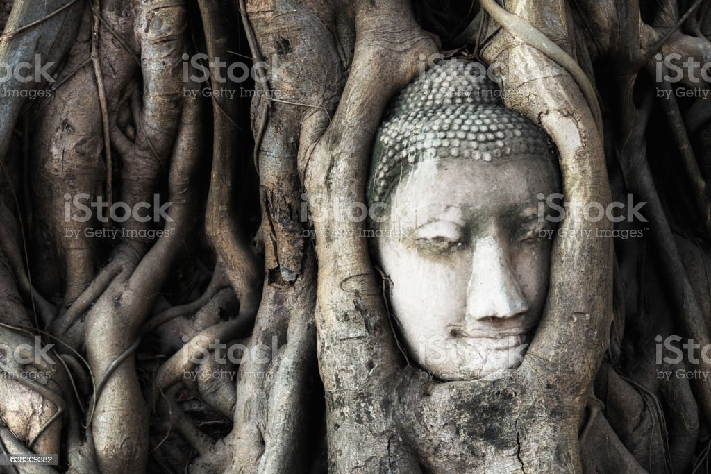 Head of Buddha statue in tree roots at Mahathat temple stock photo