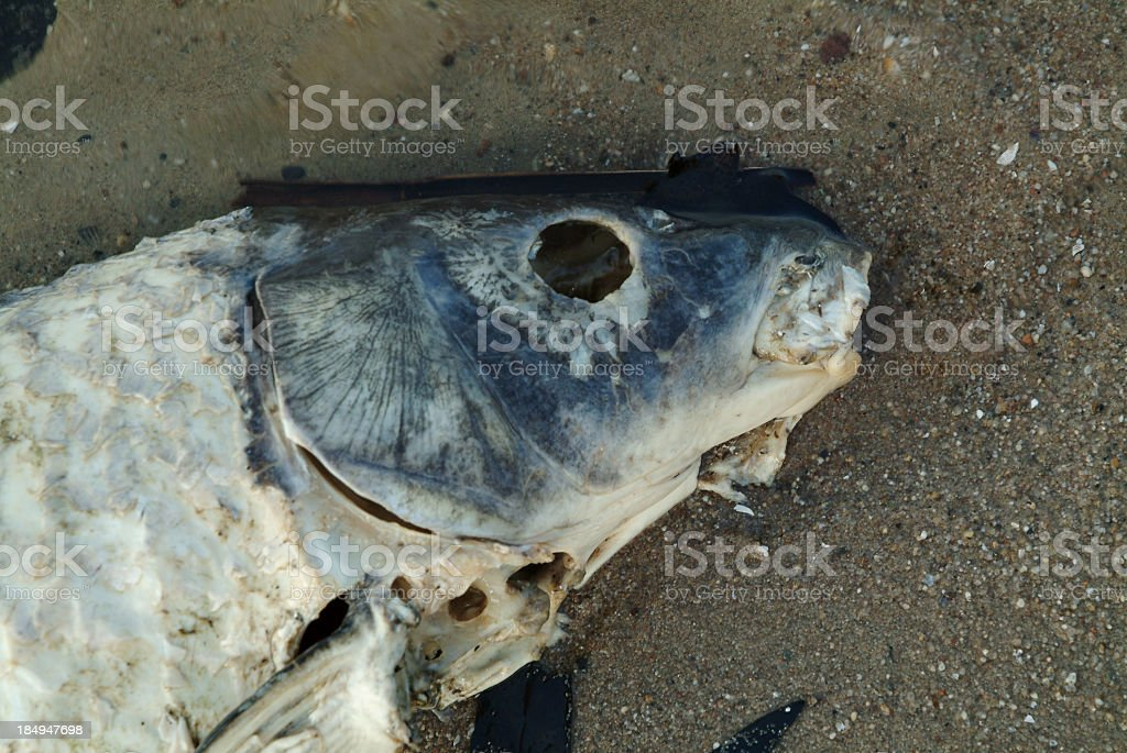 Head of dead fish in sand stock photo