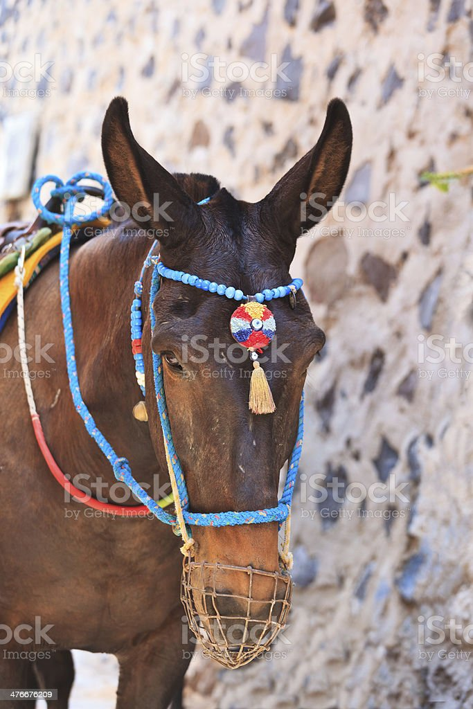 head of donkey from Santorini royalty-free stock photo