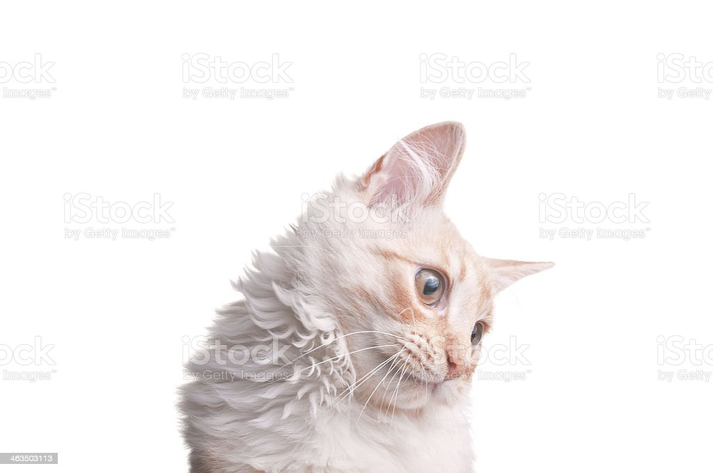 head of ginger cat stock photo