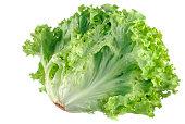 Head of lettuce on white background