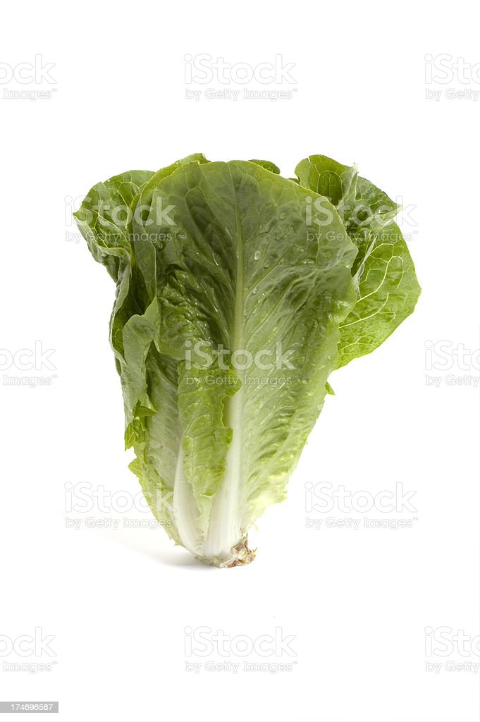 Head of romaine lettuce on white background stock photo