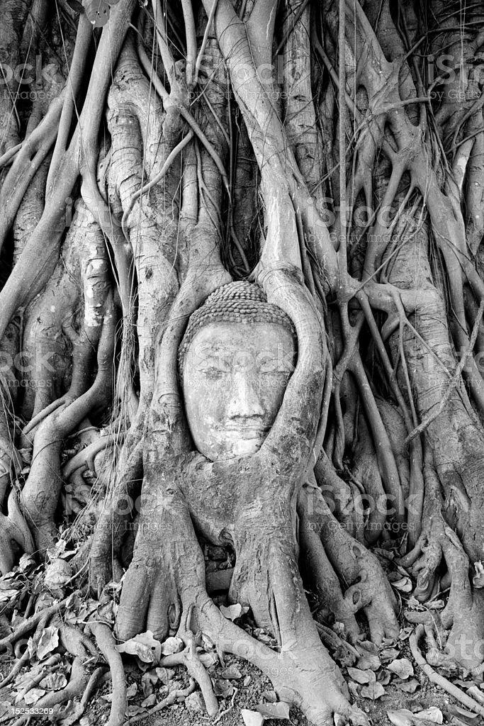 Head of Sandstone Buddha at Wat Mahatat, Ayutthaya royalty-free stock photo