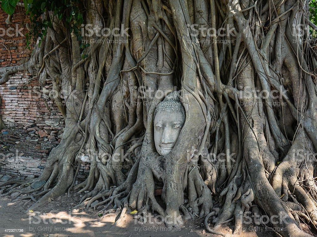 Head of Sandstone Buddha - Ayutthaya, Thailand stock photo
