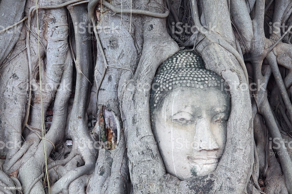 Head of Sandstone Buddha in The Tree stock photo