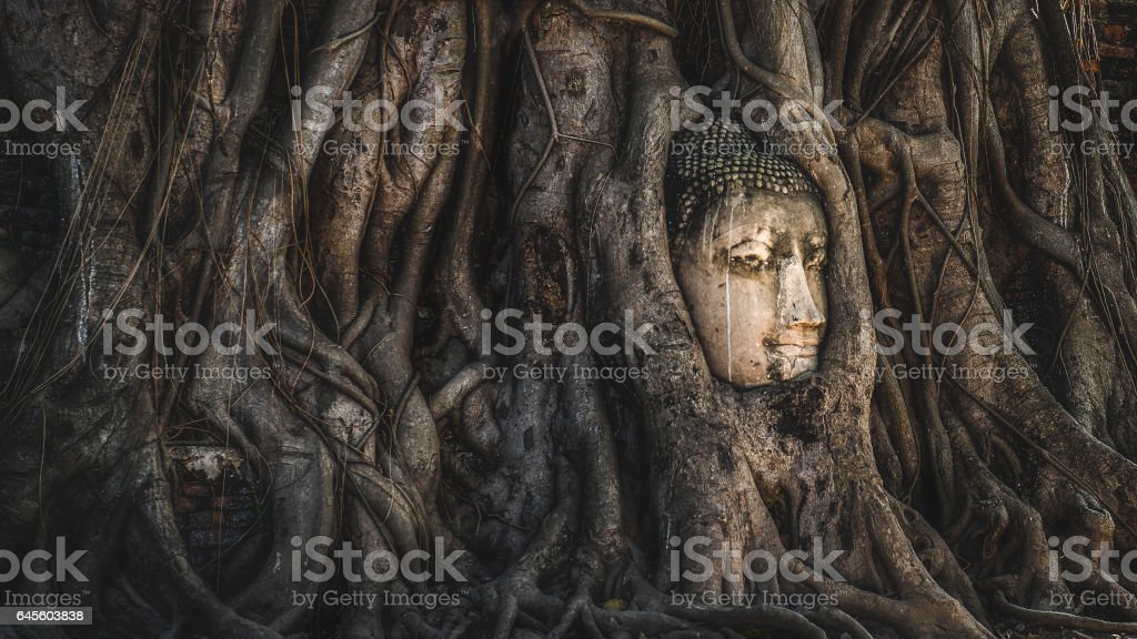 Head of Sandstone Buddha in The Tree Roots at Wat Mahathat, Ayutthaya, Thailand stock photo