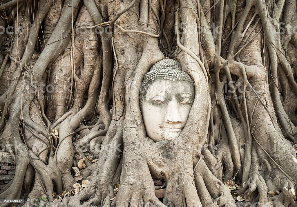 Head of Sandstone Buddha in The Tree Roots. stock photo