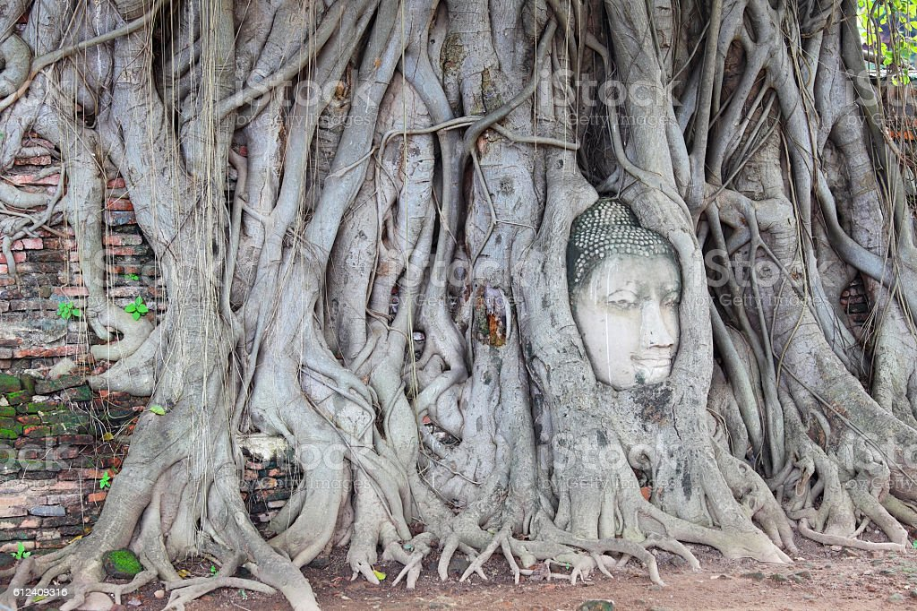 Head of Sandstone Buddha in The Tree Roots stock photo