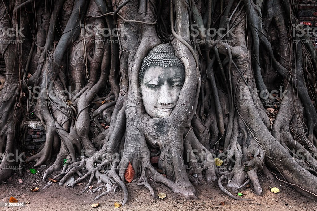 Head of Sandstone Buddha in Tree Roots, Ayutthaya stock photo