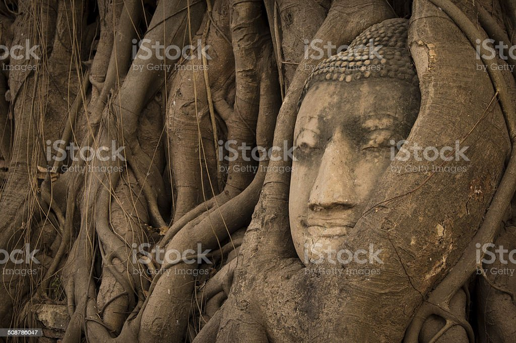 Head of Sandstone Buddha overgrown by tree stock photo