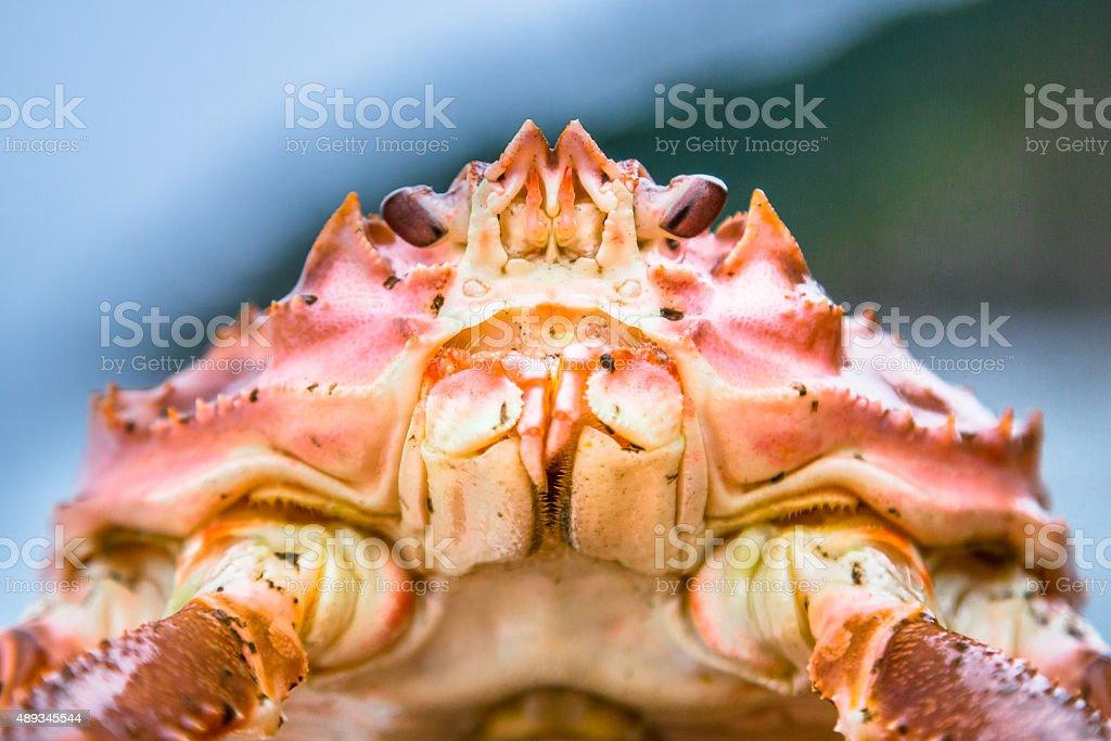 Head of Snow Crab stock photo