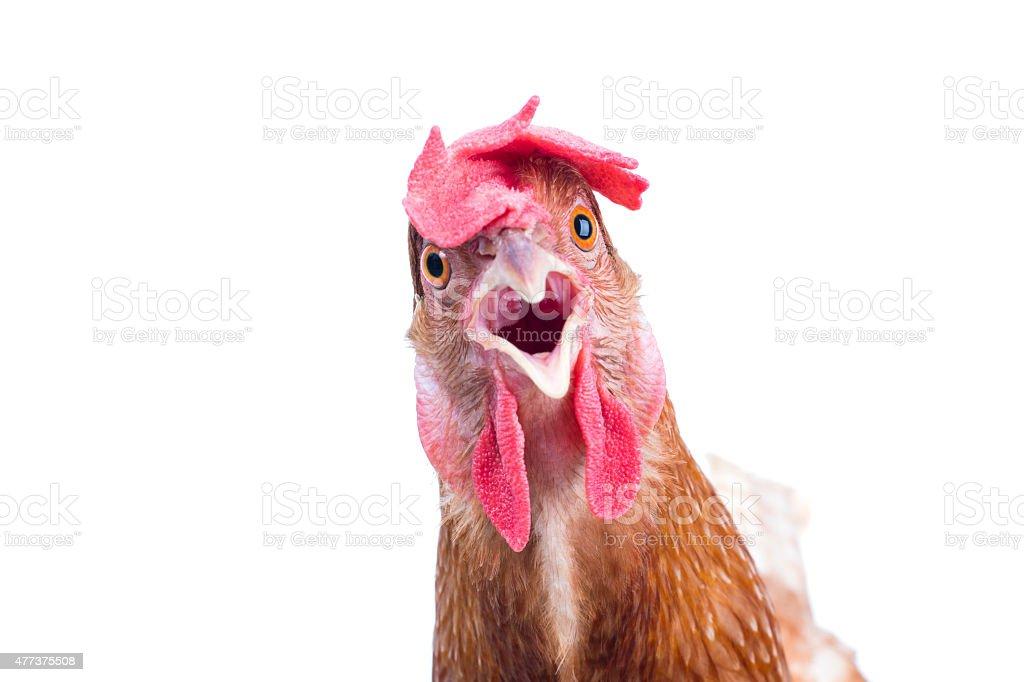 head of surprising hen stock photo