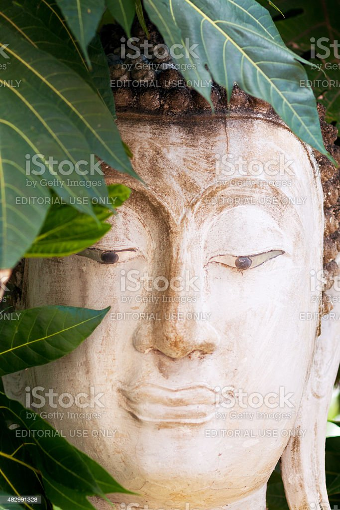 Head of thai buddha in leafs of tree stock photo