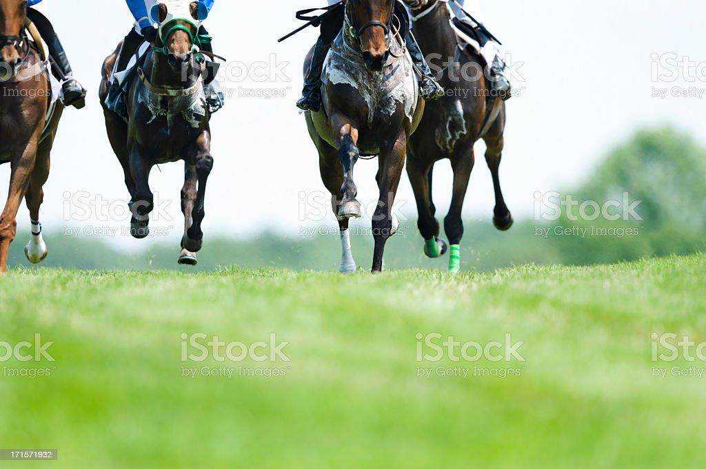 Head On Horse Racing on turf - Steeplechase stock photo