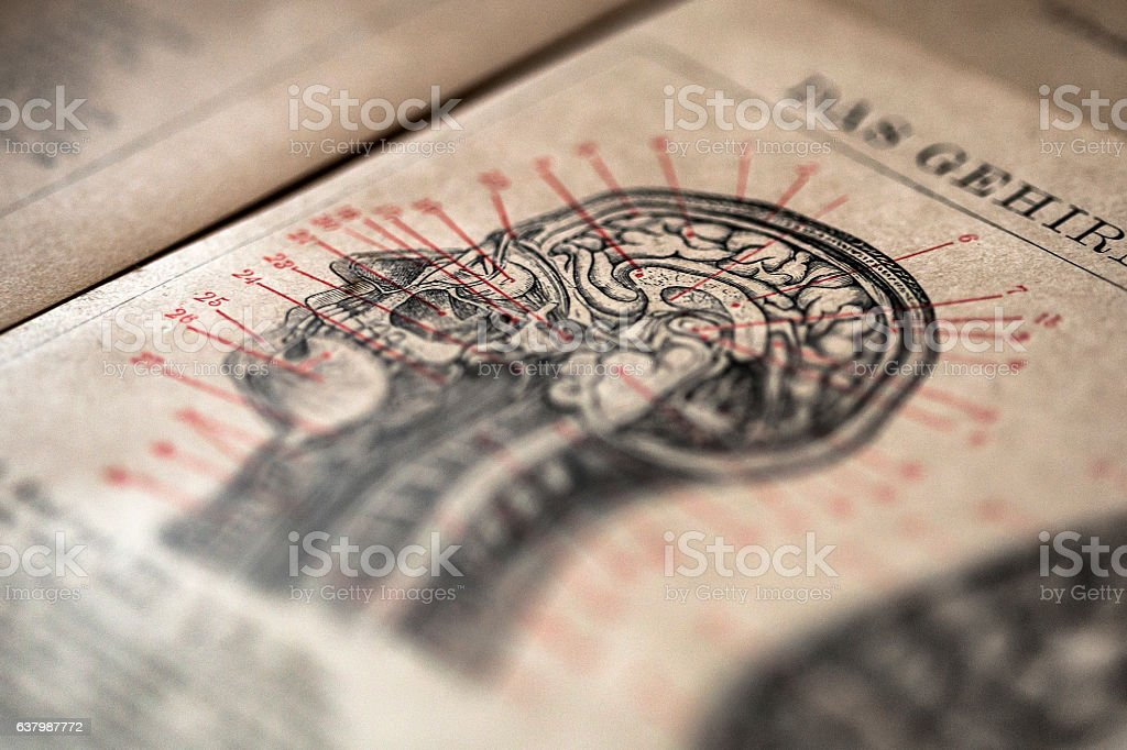 Head section stock photo
