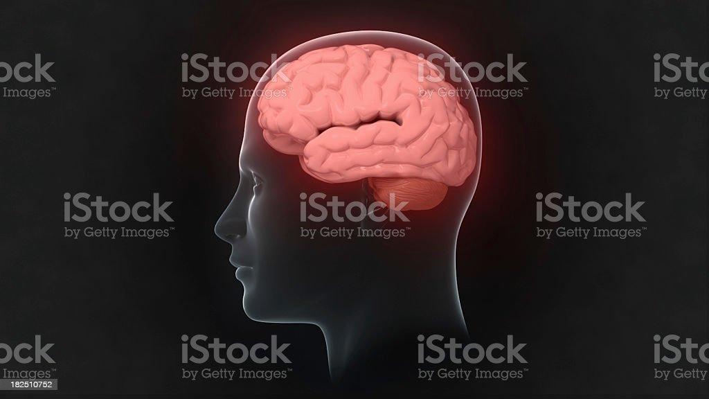 Head with glowing brain stock photo