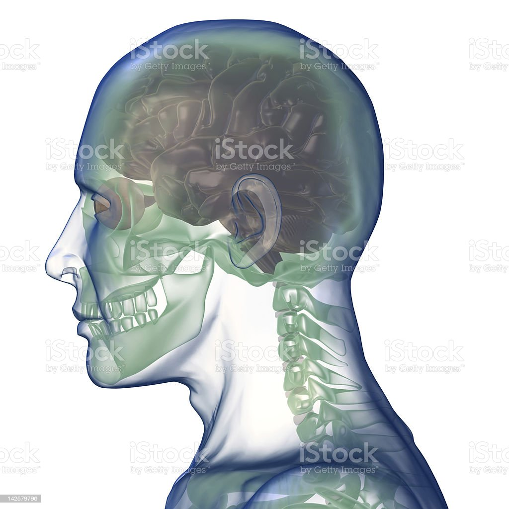 head x_ray right view stock photo