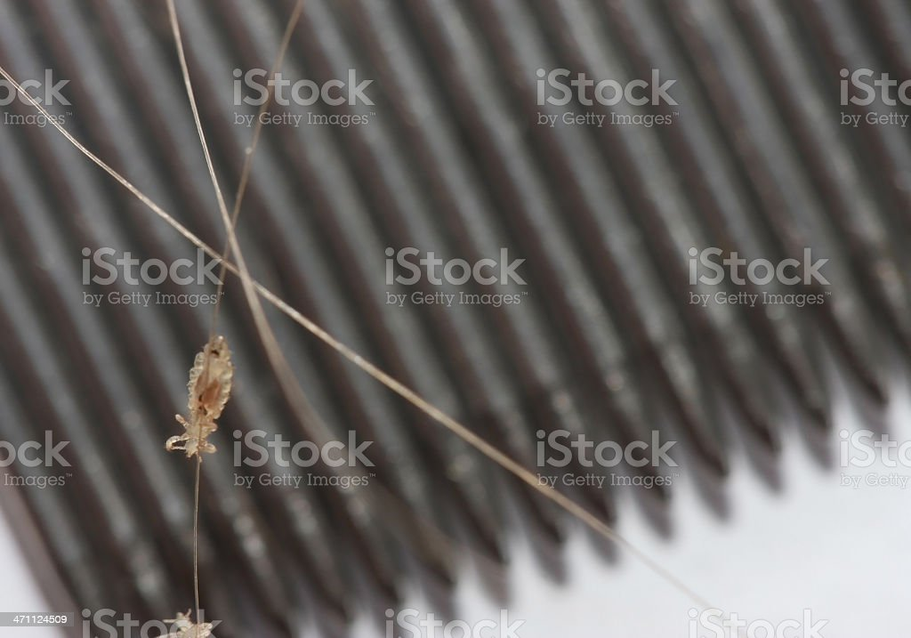 Headlice with Nit comb in Background stock photo