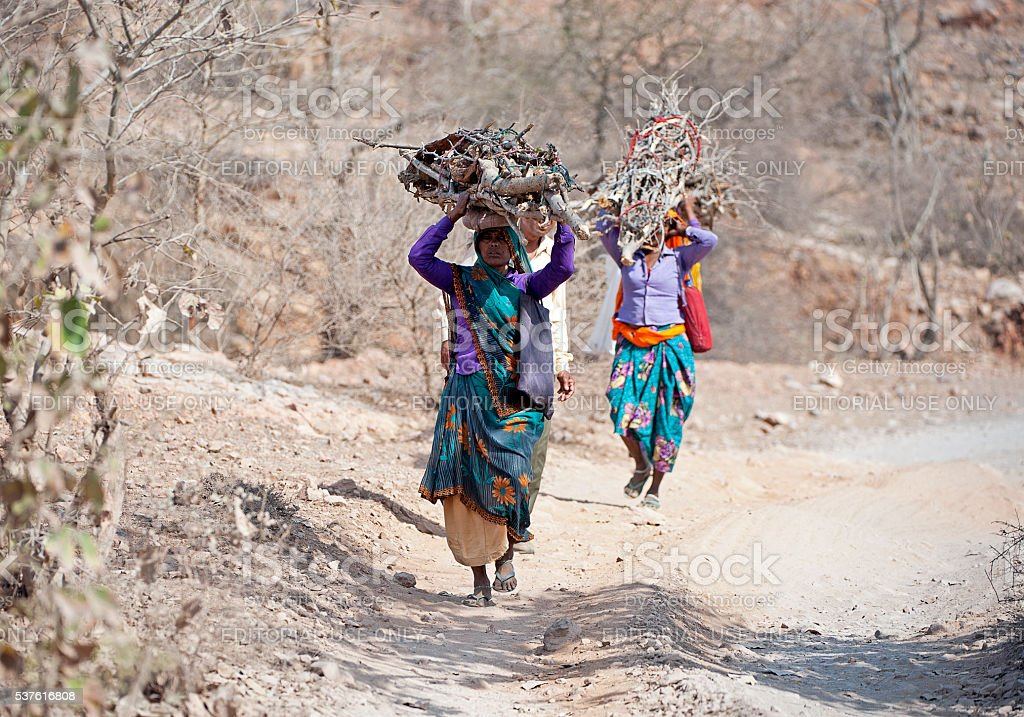 Headloads of wood, Ranthambore, Rajasthan, India stock photo