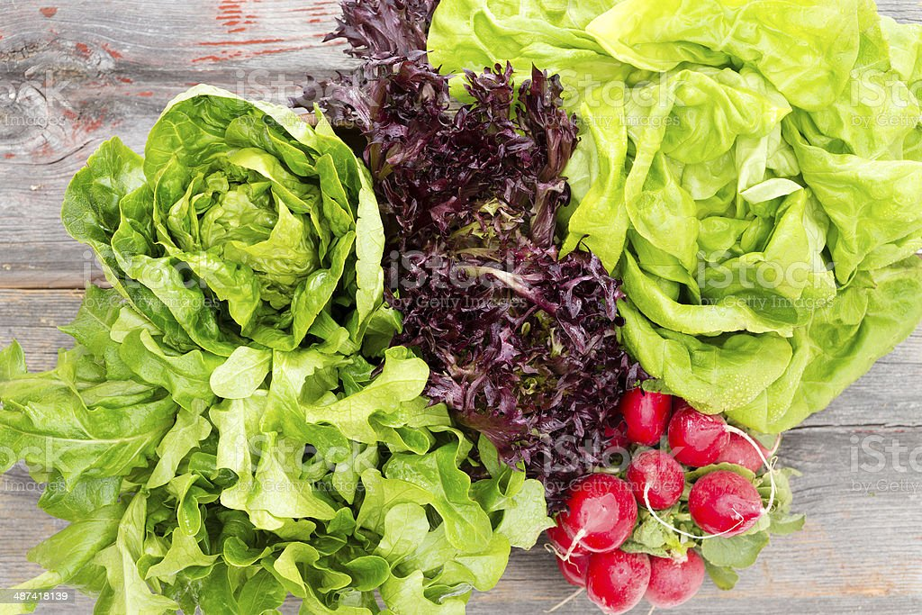 Heads of assorted fresh lettuce with radishes stock photo