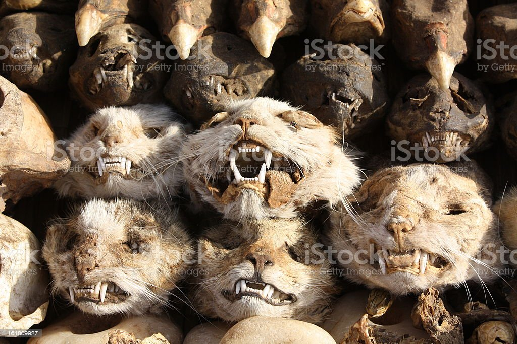 Heads of Cats at Voodoo Akodessewa Fetish Market, West Africa royalty-free stock photo