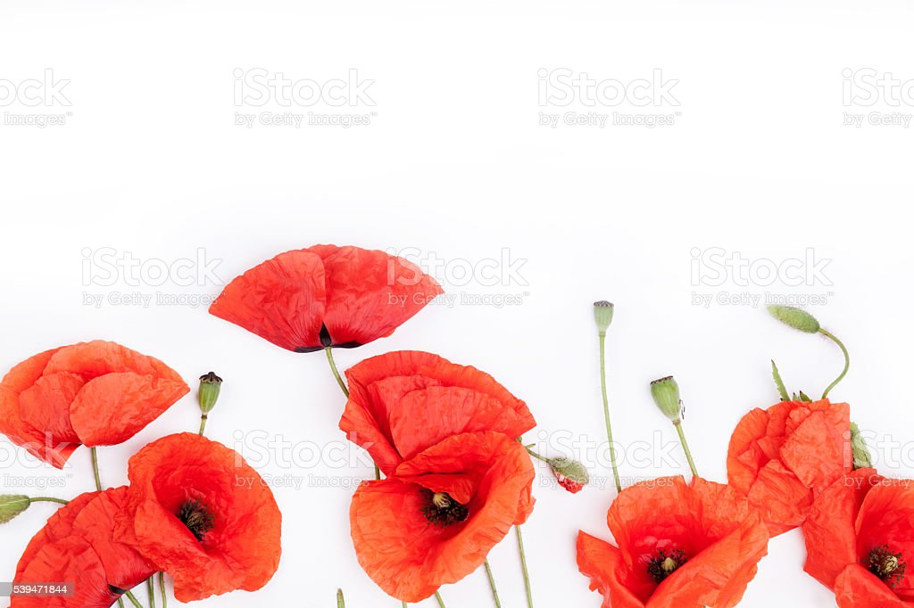 Heads of red weeds on white background top view stock photo