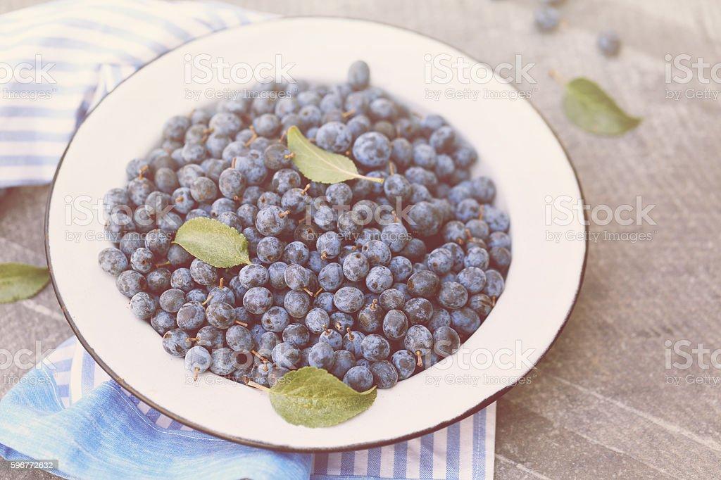 healing fruit Prunus spinosa stock photo