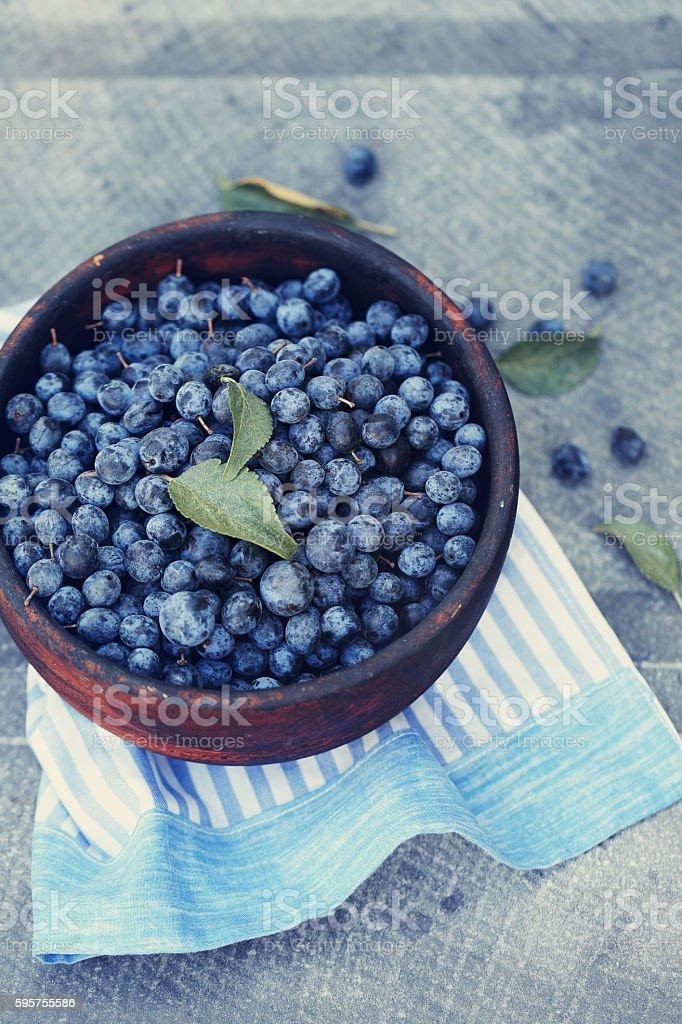 healing Prunus spinosa stock photo