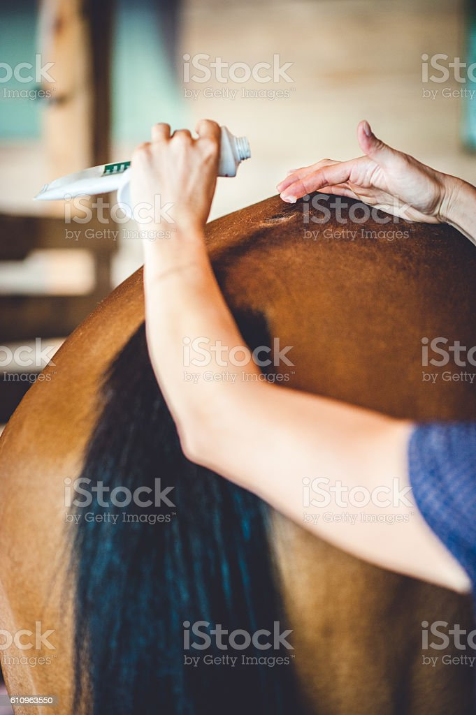 Healing the Injury on a Horse Back stock photo