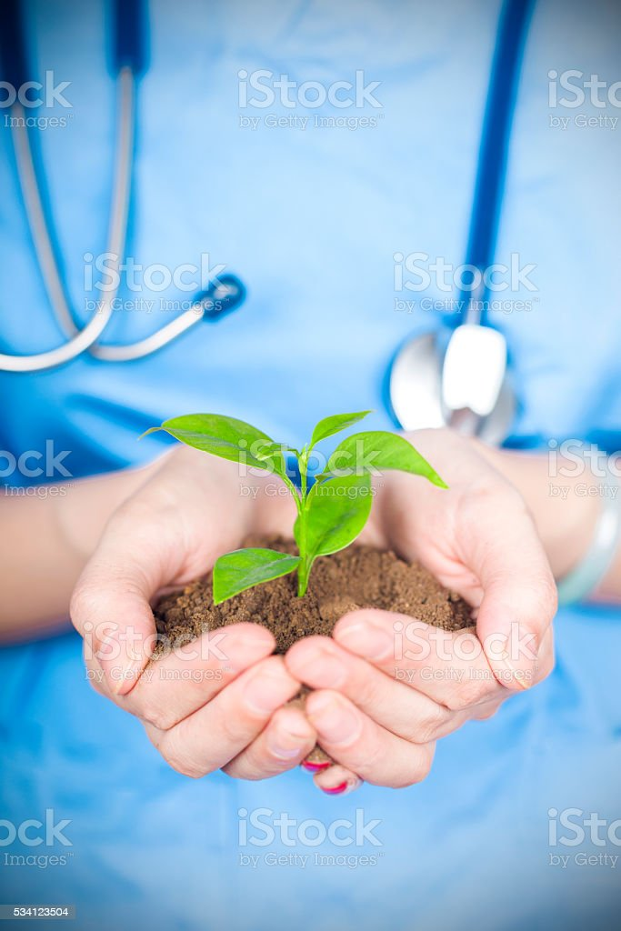 health care:doctor holding new life in hands stock photo