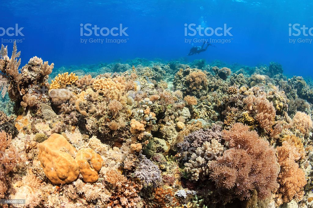 Healthy and colorful hard and soft corals stock photo