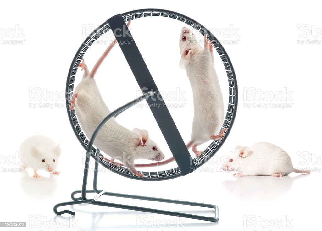 Healthy Athletic White Mice Working-Out At The Mouse Wheel Gym stock photo